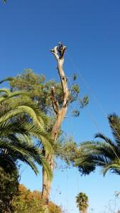 travaux difficiles à roquefort les pins